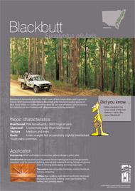 Blackbutt A4 poster