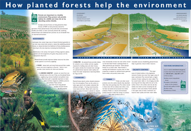 how-planted-forests-help-the-environment