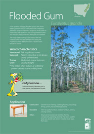 Flooded gum A4 poster