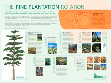 'The pine plantation rotaion' poster