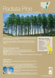 Radiata pine A4 poster