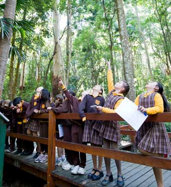 Children looking at forest trees