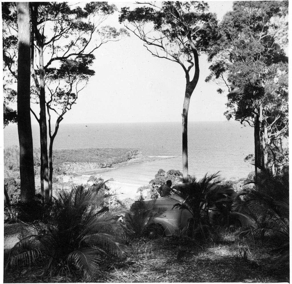Image of Kioloa State Forest