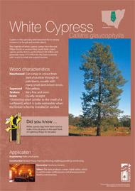 White cypress A4 poster