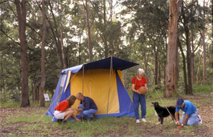 camping in a state forest