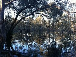 Koondrook-Perricoota flooding