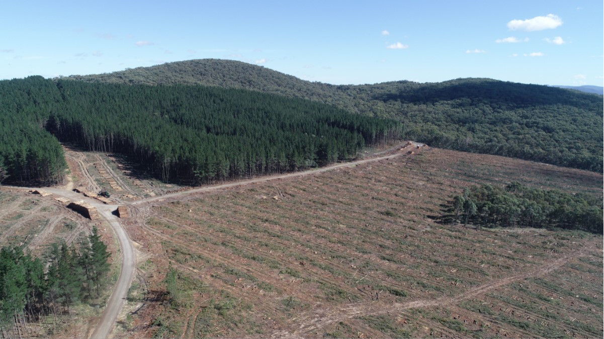 Photo – 'Kinross_Overview and retained natural forest'Shows the harvested pine plantation and retained native vegetation.